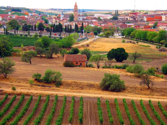 La 'Ruta del Vino de Rueda' se traza el camino
