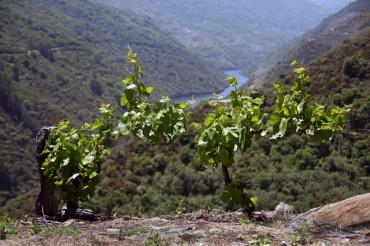 Puertas Abiertas en la Ruta del Vino de Ribeira Sacra