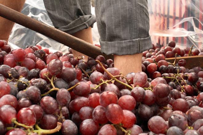 Benlloch celebra el I Encuentro Internacional del Vino. Castellón