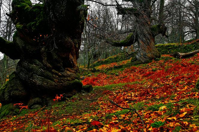 Escapa al otoño mágico de Extremadura