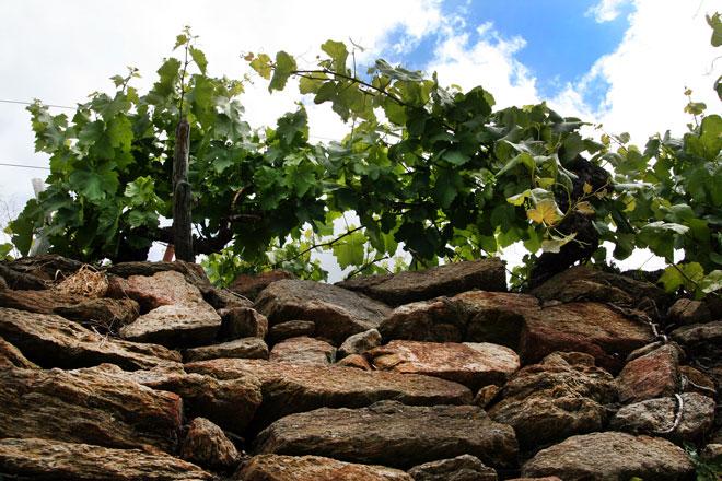 La Cata de los Vinos de la Ribeira Sacra entrega sus premios anuales