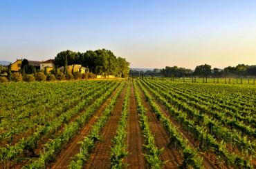 Torres China se afianza como la segunda importadora de vinos en el mercado asiático
