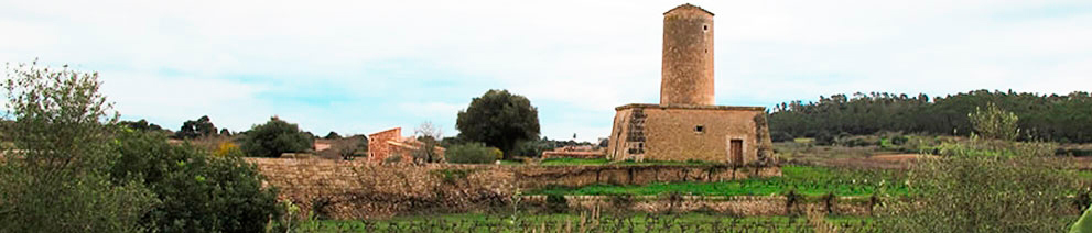 bodega-mesquida-panoramic