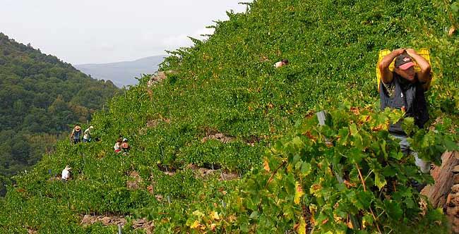 El Godello más intrépido. Algueira Escalada, Adega Algueira, www.globalstylus.com www.stylusvinum.com