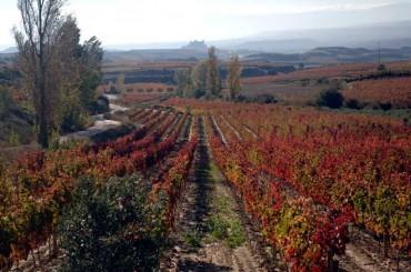 El paisaje más bello en la vendimia de Rioja Alavesa