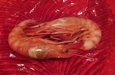La gamba roja de Dénia se prepara para su Concurso Internacional de Cocina Creativa