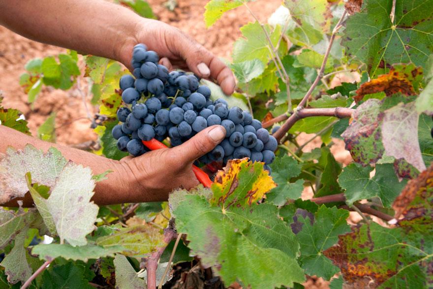 Regreso al futuro con ánforas de terracota. Caprasia Bobal. Vegalfaro, Viñedos y Bodegas, www.globalstylus.com