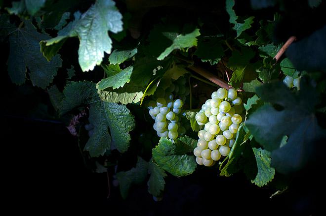 Las mil y una formas de participar en la vendimia de la Ruta del Vino de Rueda