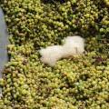La cosecha de la DOP Valencia será 'muy buena', http://globalstylus.com/