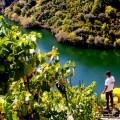 La otra orilla del Sil. Porto de Lobos, Adega Ponte da Boga, http://globalstylus.com/