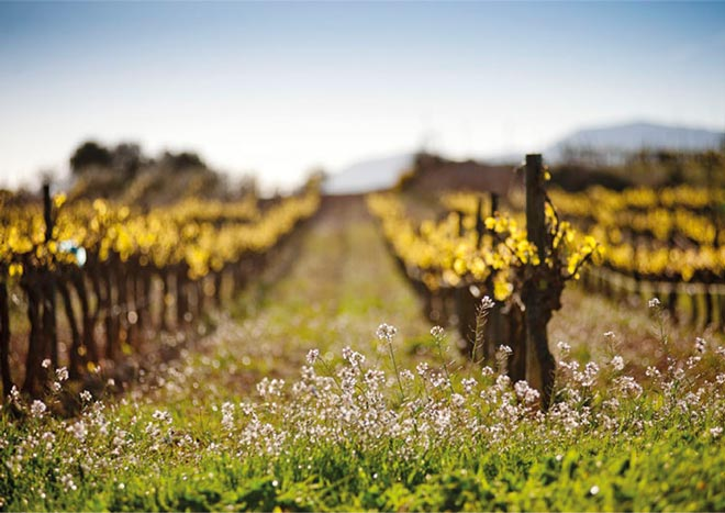 Gramona promueve la viticultura biodinámica con 'Alianzas por la Tierra'