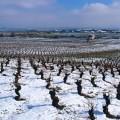 Los vinos del Bierzo presentan sus nuevas añadas en Valencia, http://globalstylus.com/