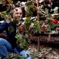 El Tempranillo del altiplano valenciano. Vinos Bio de Pedro Olivares, GlobalStylus