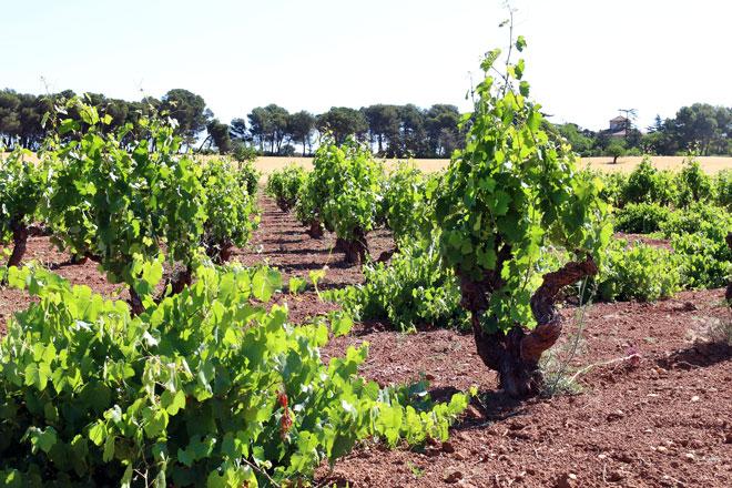 La DO Valencia paraliza la resolución del Secretario Autonómico de Agricultura