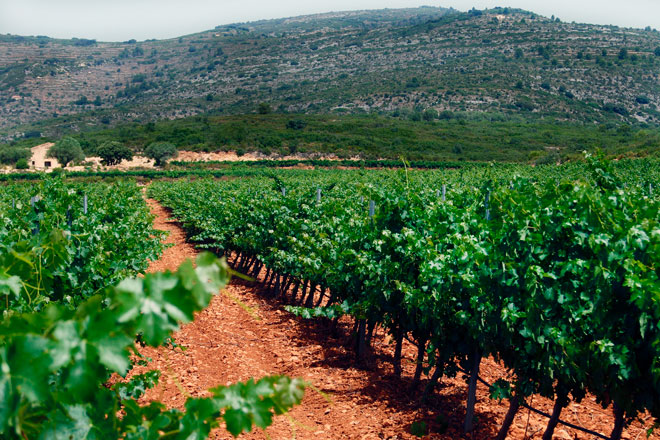 Uvas maduras en vinos equilibrados, Barranc dels Cirers, Castelló