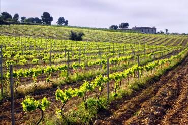El humus de lombriz mejora la calidad del vino