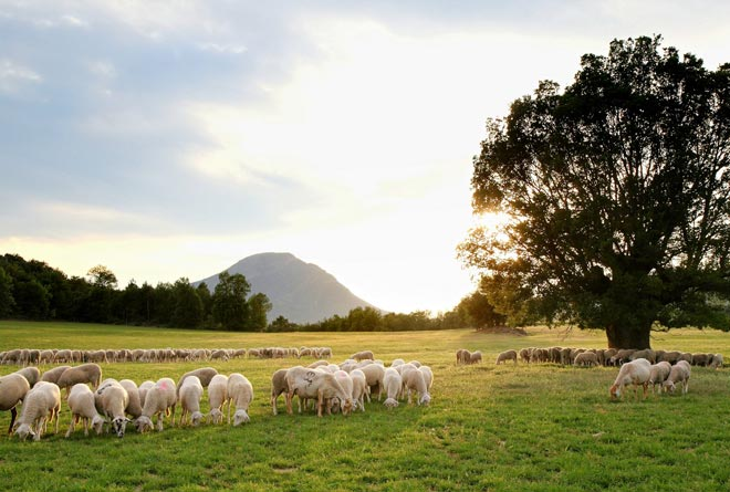 Huesca abre el debate agroalimentario y gastronómico con 'Hecho en Los Pirineos'