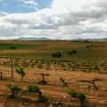 Un viaje por los viñedos de Utiel