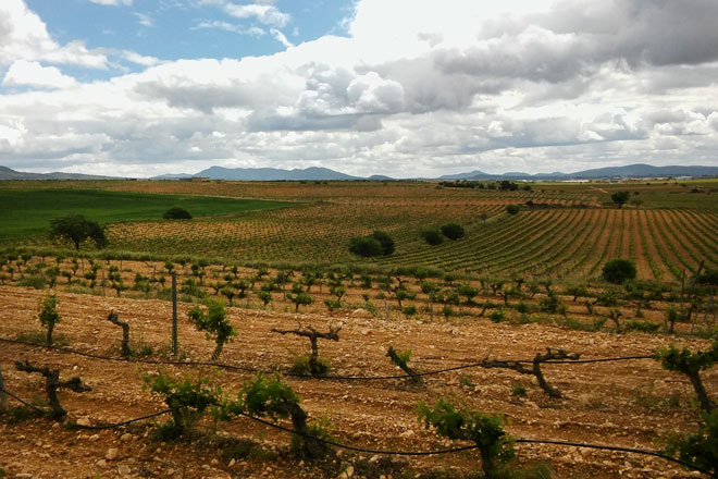 A wine tour to Utiel-Requena. Valencia, Spain
