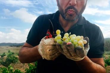 sa&sa, Vinos Bio de Pedro Olivares. De las Moscatel y Malvasía de la Vall dels Alcalans