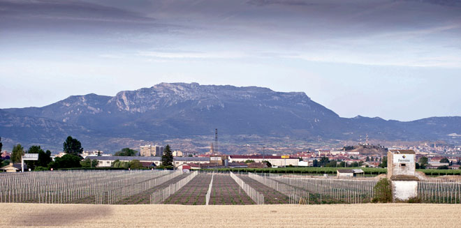 Bodegas Paternina invierte en varietales blancas