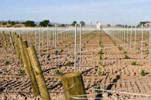 2--Bodegas-Paternina,-Nuevo-viñedo-varietales-blancas