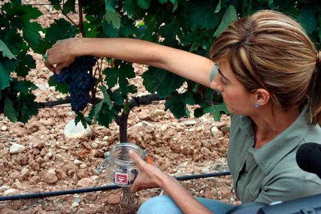 Se inicia la vendimia en Rioja con las mejores expectativas