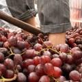Encuentro Internacional del Vino, Benlloch