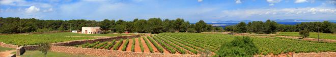 Dulces uvas del Mediterráneo. Bodegas Terramoll, Formentera