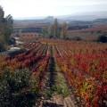 El paisaje más bello en la vendimia de Rioja Alavesa. Vendimia Ruta del Vino de Rioja Alevesa, www.globalstylus.com