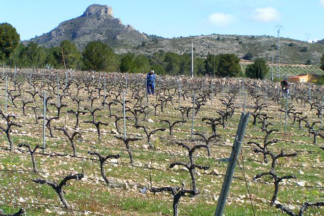 El terruño mineral del Valle de Salinas. Finca Collado, www.globalstylus.com, www.stylusvinum.com