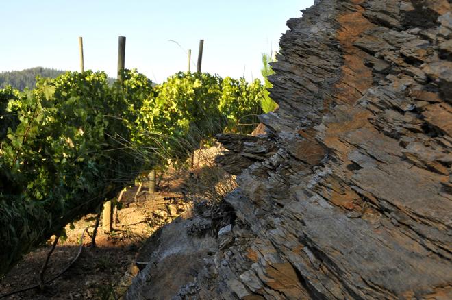 'Escaleras de Empedrado', primer vino chileno de Bodegas Torres procedente de terrazas de pizarra