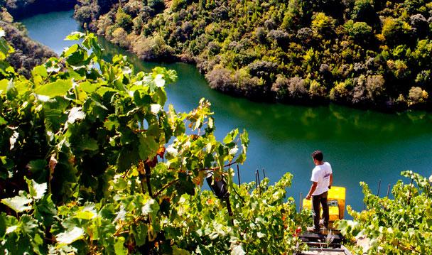 La otra orilla del Sil. Porto de Lobos, Adega Ponte da Boga