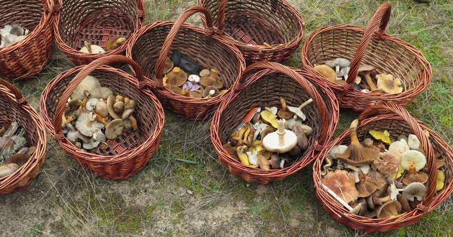 El restaurante LeDomaine, de Bodegas Abadía Retuerta, ofrece una experiencia micológica única, www.globalstylus.com, www.stylusgastro.com