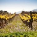 Gramona promueve 'Alianzas por la Tierra' con viticultura biodinámica, WWW.GLOBALSTYLUS.COM