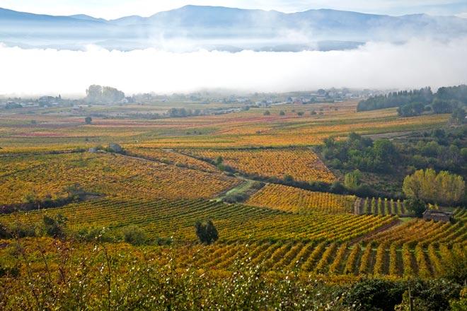 Salen al mercado los primeros Vinos de Villa y de Paraje del Bierzo