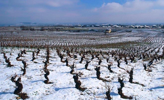 Los vinos del Bierzo presentan sus nuevas añadas en Valencia