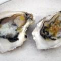 Cata de ostras y cena en Restaurante El Cabanyal