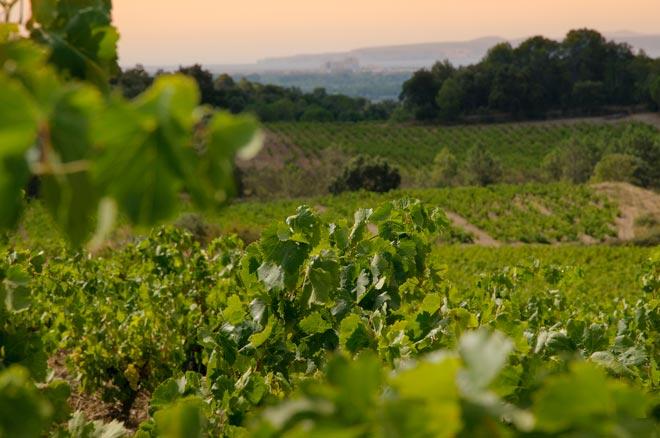 El vino del mar, el terruño y la Tramontana. Somiadors