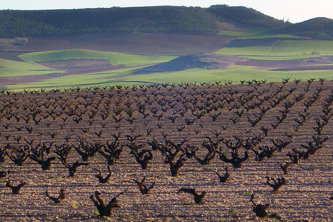 El sueño de un viticultor. Los Astrales, Ribera del Duero