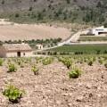 Ligero equipaje para llegar más lejos. MG Wines, Bodegas Sierra Salinas, GlobalStylus