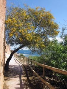 Mimosa y camino