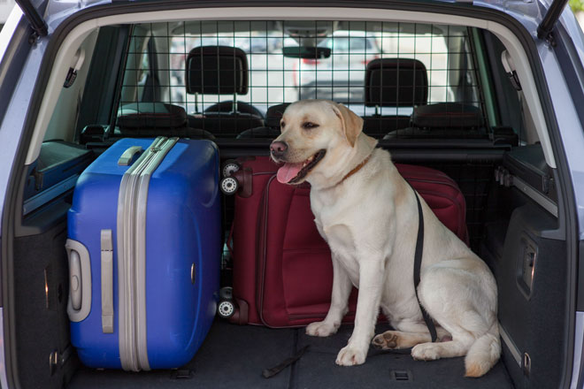 Vacaciones en carretera. No sin mi perro