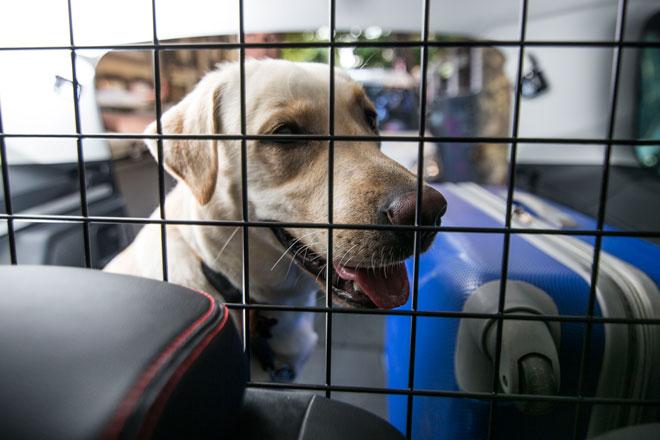 Vacaciones en carretera. No sin mi perro. SEAT