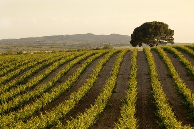 Sierra Norte triunfa con cuatro Oros en el Challenge International du Vin