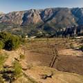 Masos. Mas de la Mona anuncia la plantación de su primer viñedo en el Valle de Guadalest