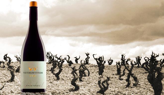 Veterum Vitium, Coviñas. Las viñas viejas del cooperativismo