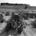 Tierras eternas para nuevos vinos. Rocha Candeal, Casa lo Alto