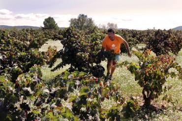 Bodegas El Villar se sitúa a la vanguardia en gestión ambiental