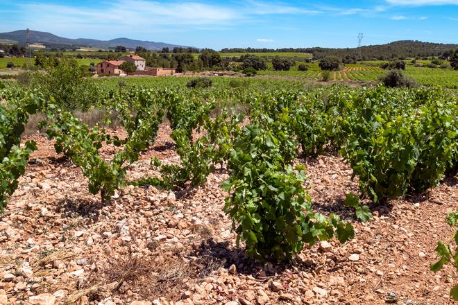 El vino de cada lugar. Casabosca, Rafael Cambra